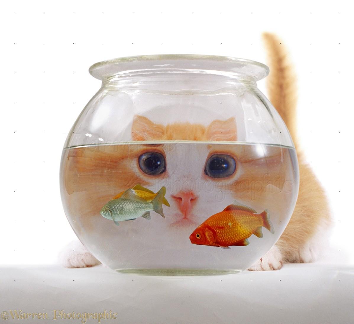 Cat Fishbowl Gif