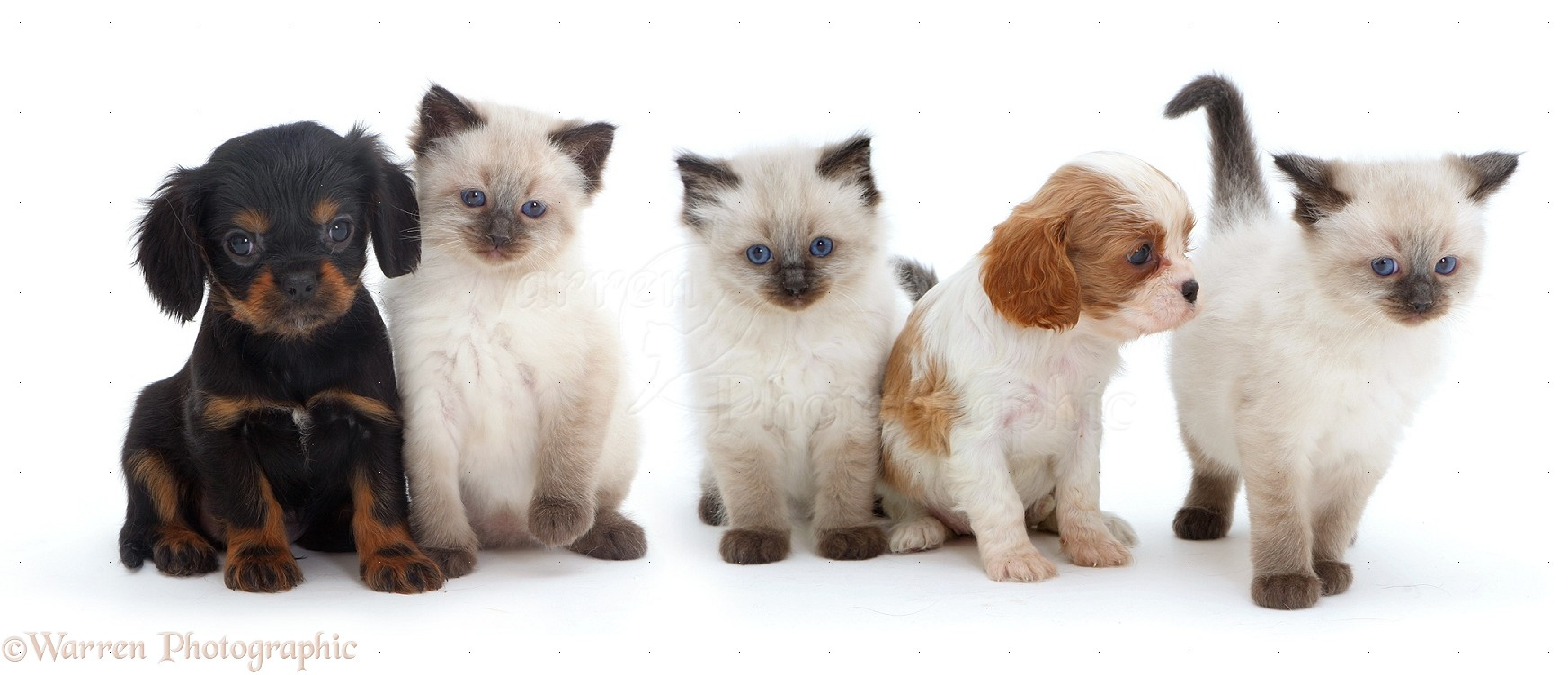 Cute Pics Of Cats And Dogs