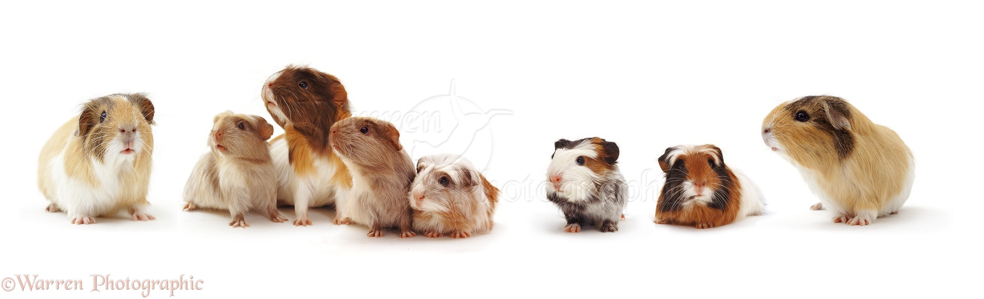Administration further 09679 Guinea Pig Family furthermore Christmas Border Clip Art as well House With Floating Roofs furthermore Presidential One Bedroom Suite V4645748. on family