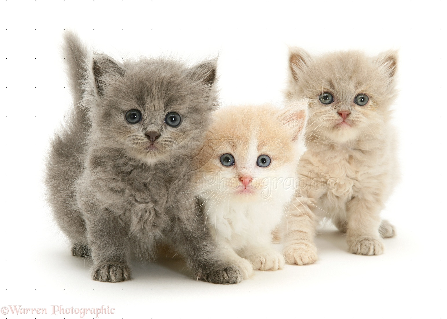 Three cute kittens photo wp10113 The three cats
