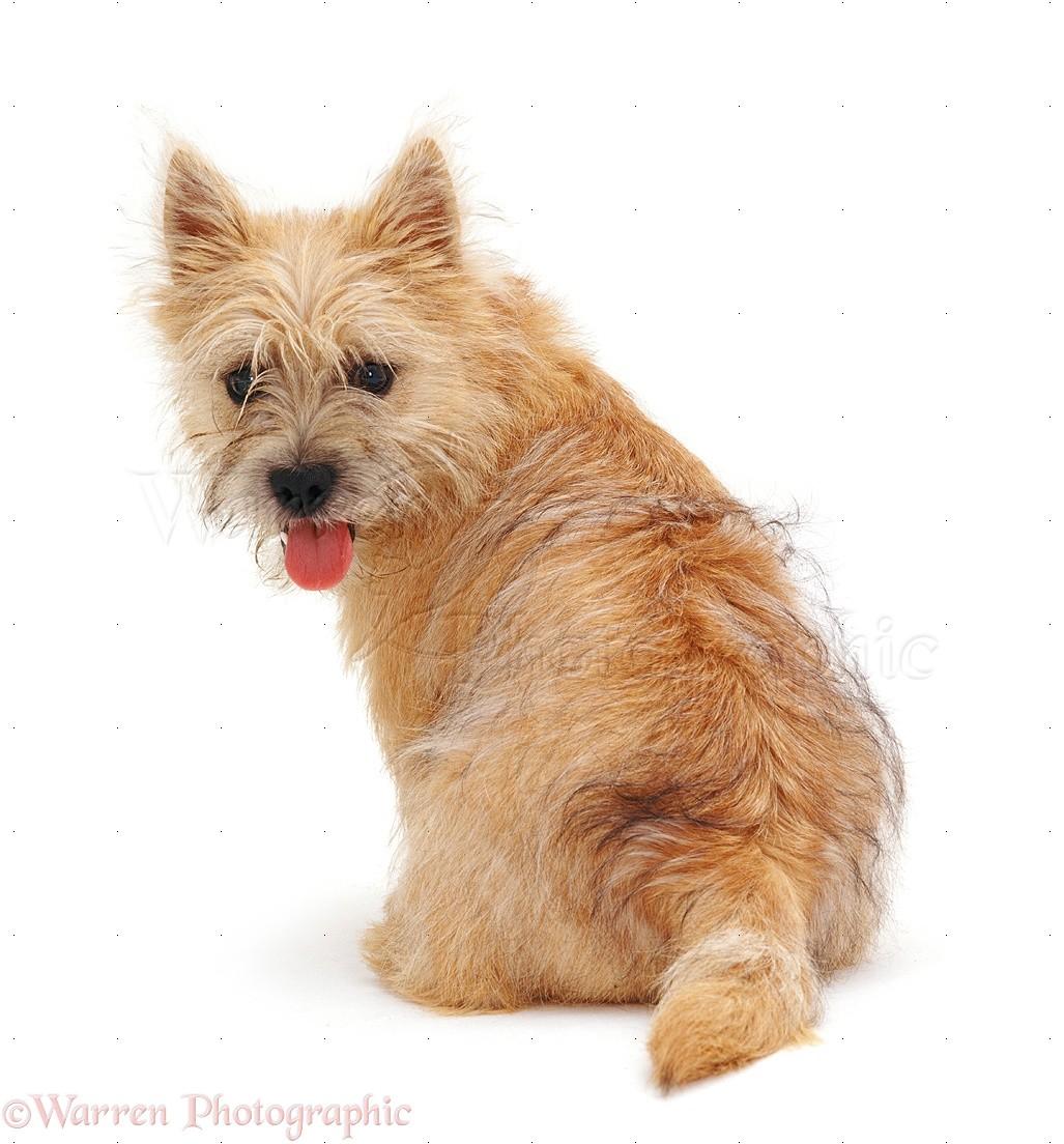 Uk Oldest Dog Breed Uk