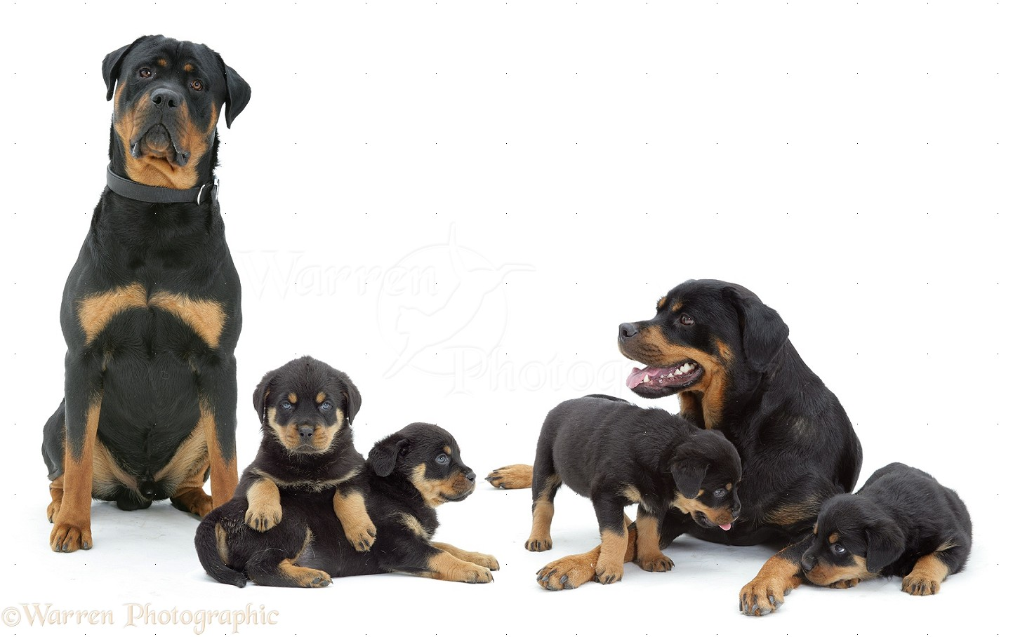 Family Picture Dog
