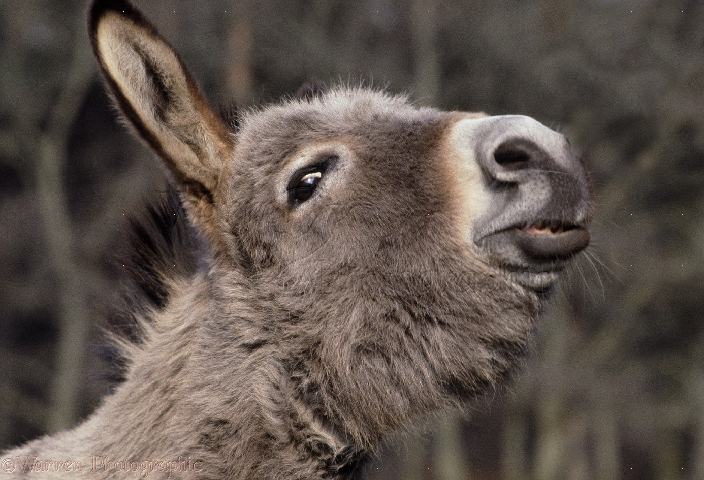 funny donkey faces - photo #22