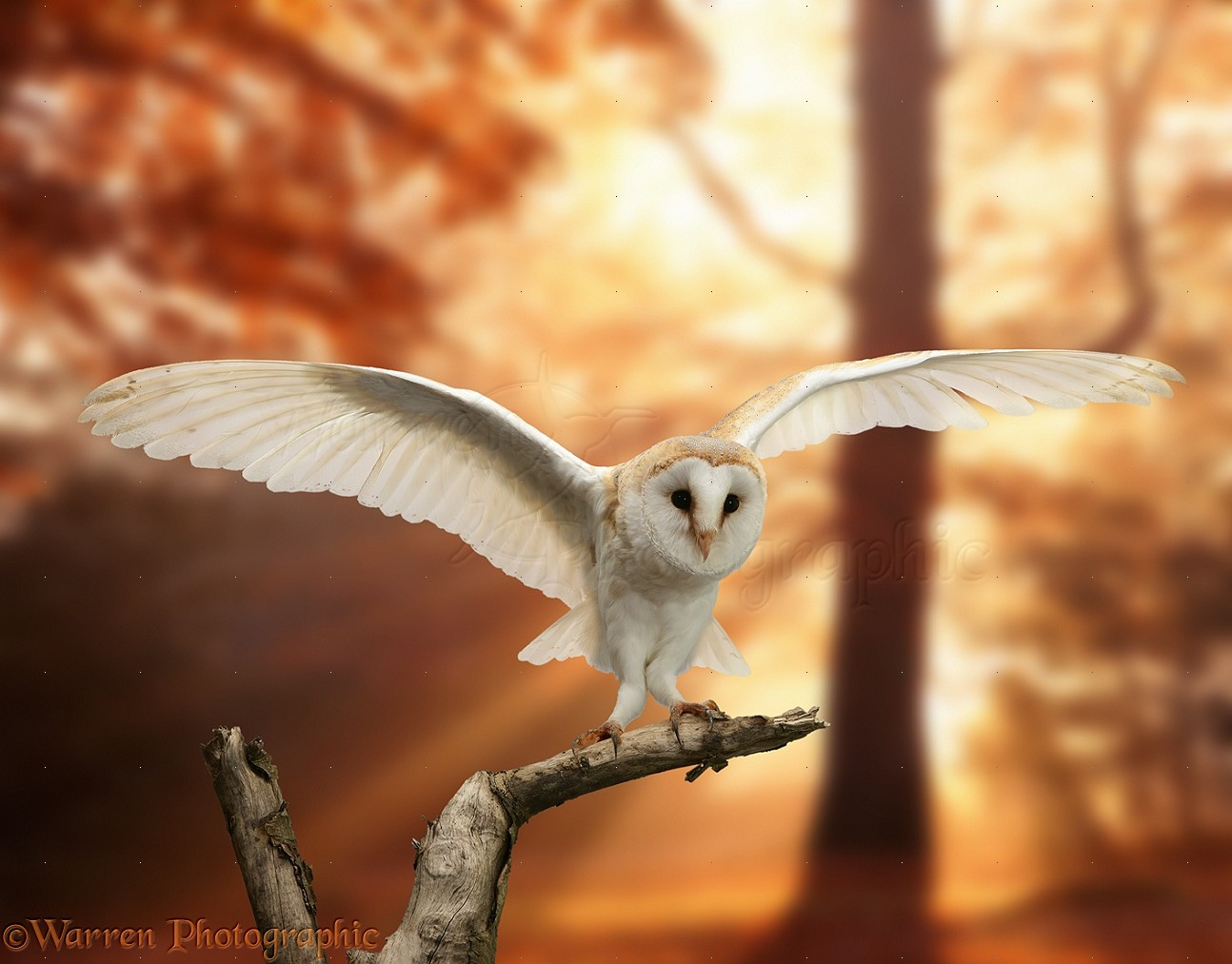 Image result for autumn owls