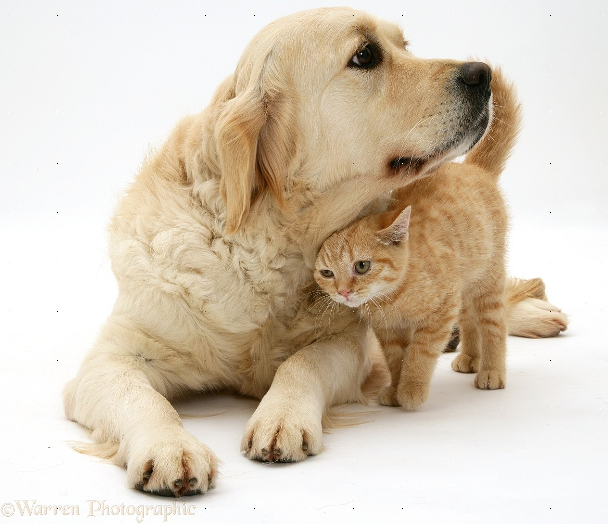 Vday Dog And Cat Pics