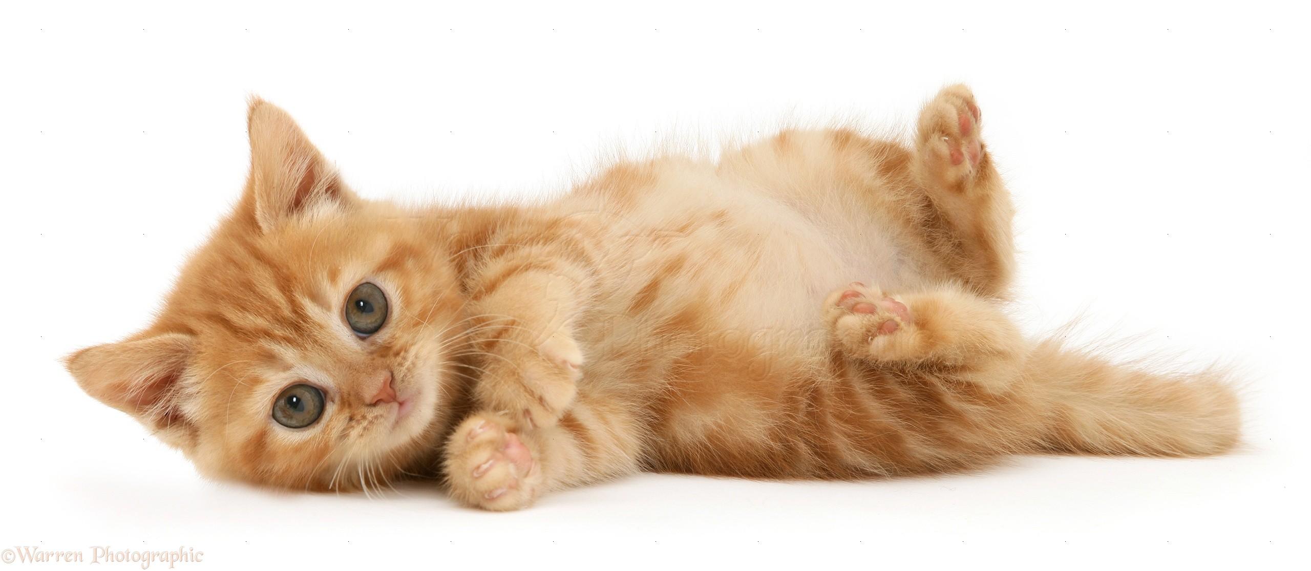 Cute Back Cats