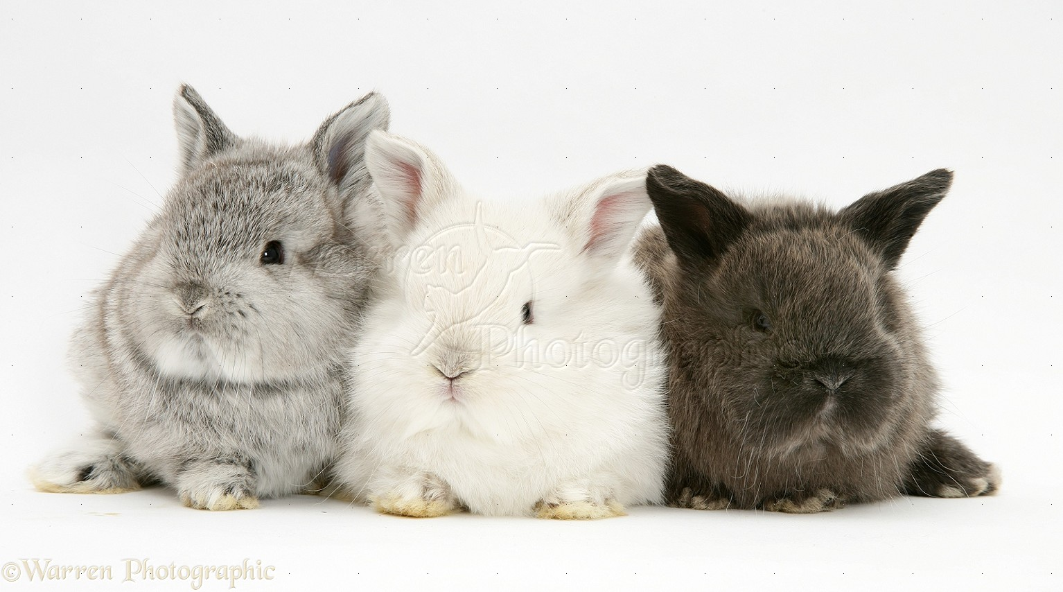 Cute Baby Rabbits White Background