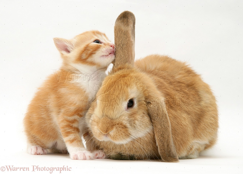 bunny rabbit sniffing around - photo #40