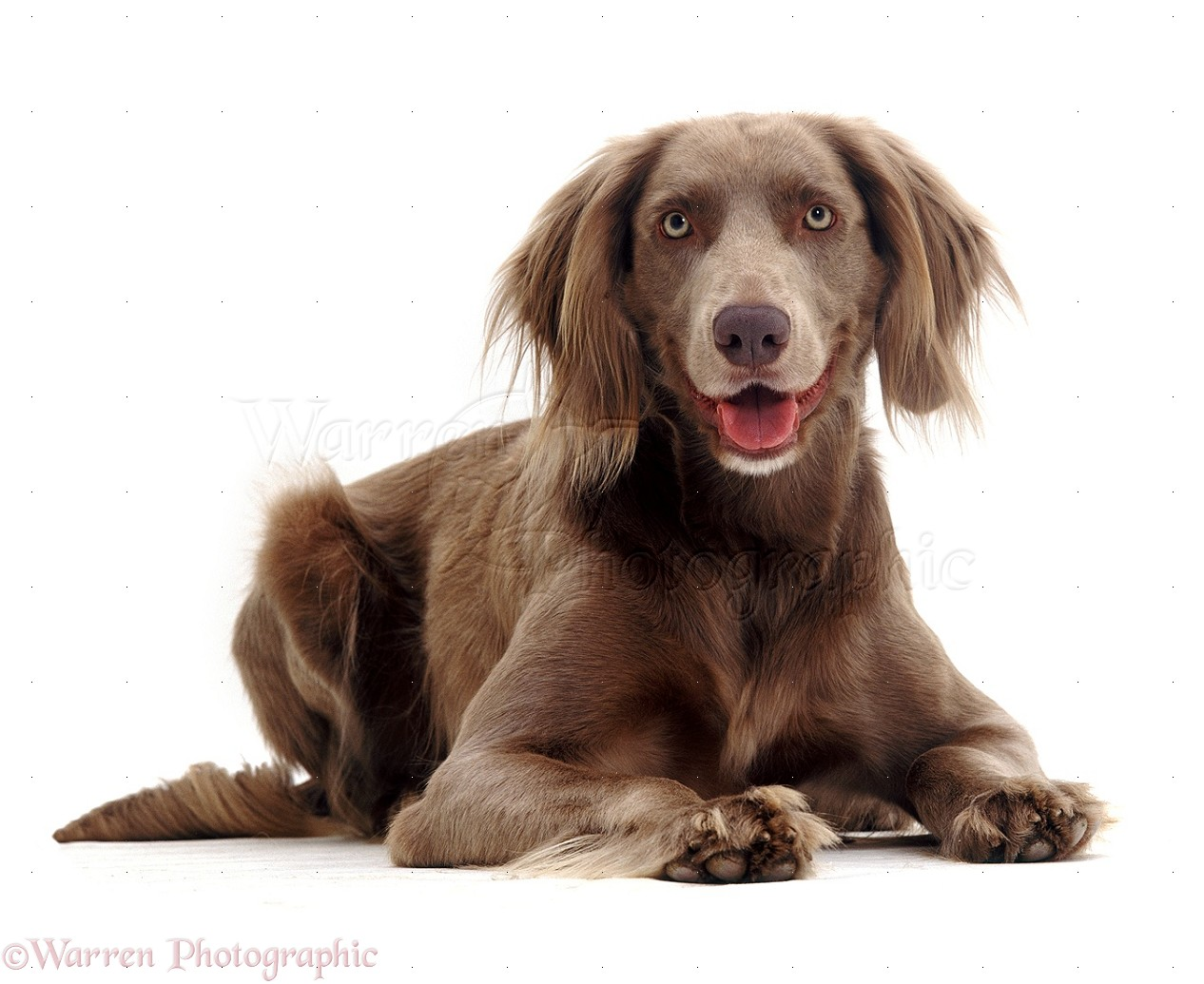 Dog breed in max