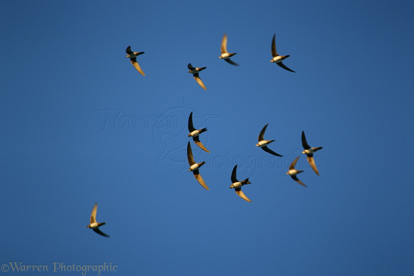 up map with 12194 Alpine Swifts on 2765417474 as well  additionally Rnr further 12194 Alpine Swifts also 7441715308.
