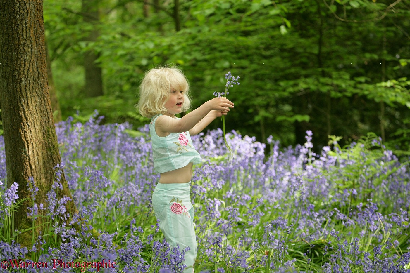 us map for children with 12571 Little Girl In Bluebell Wood on Bibione likewise Mauritius Island Guide I 83 also Prayer Request as well 12571 Little Girl In Bluebell Wood besides UNF4 5 6.