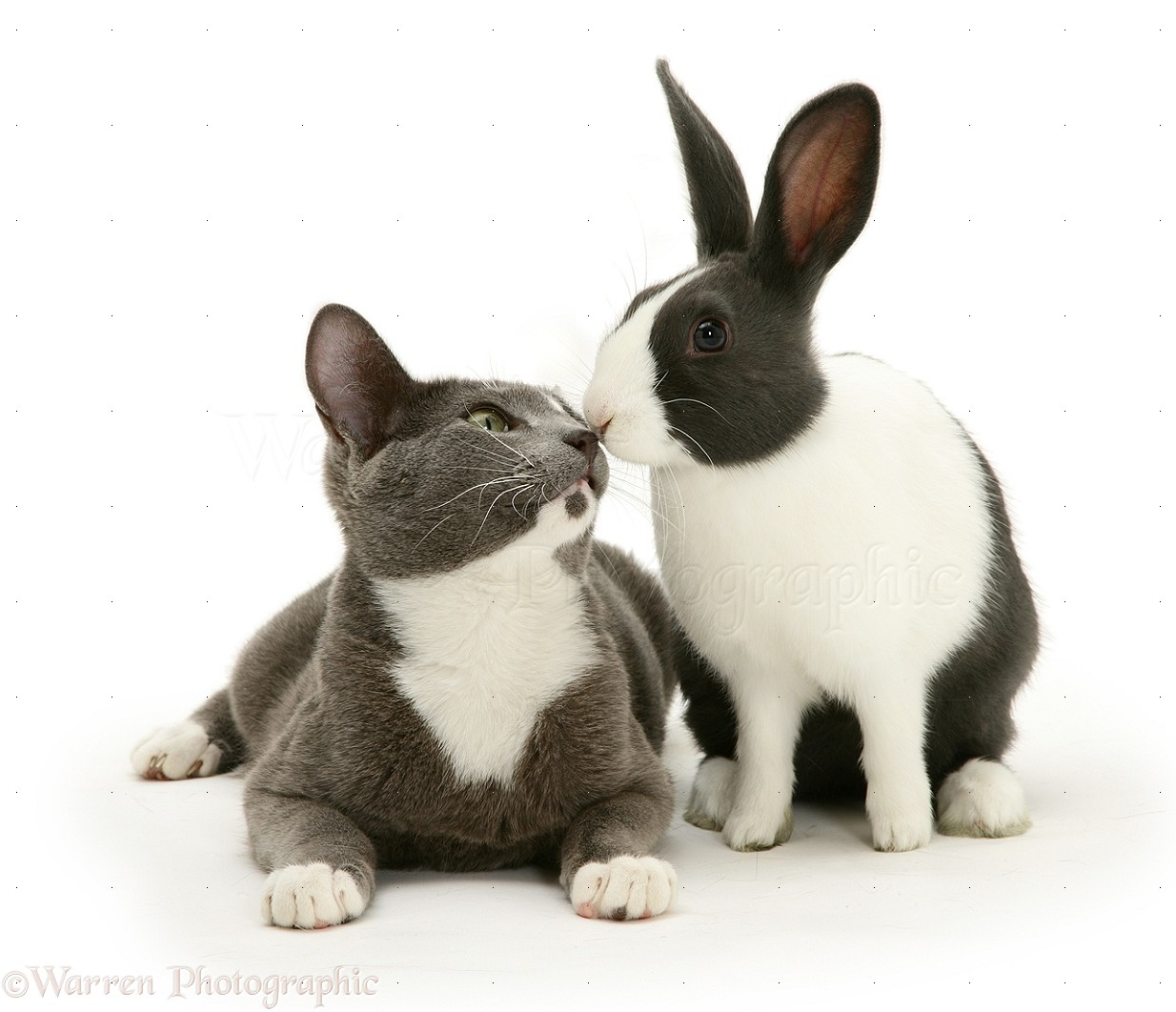 Cat And Rabbit Breed Together