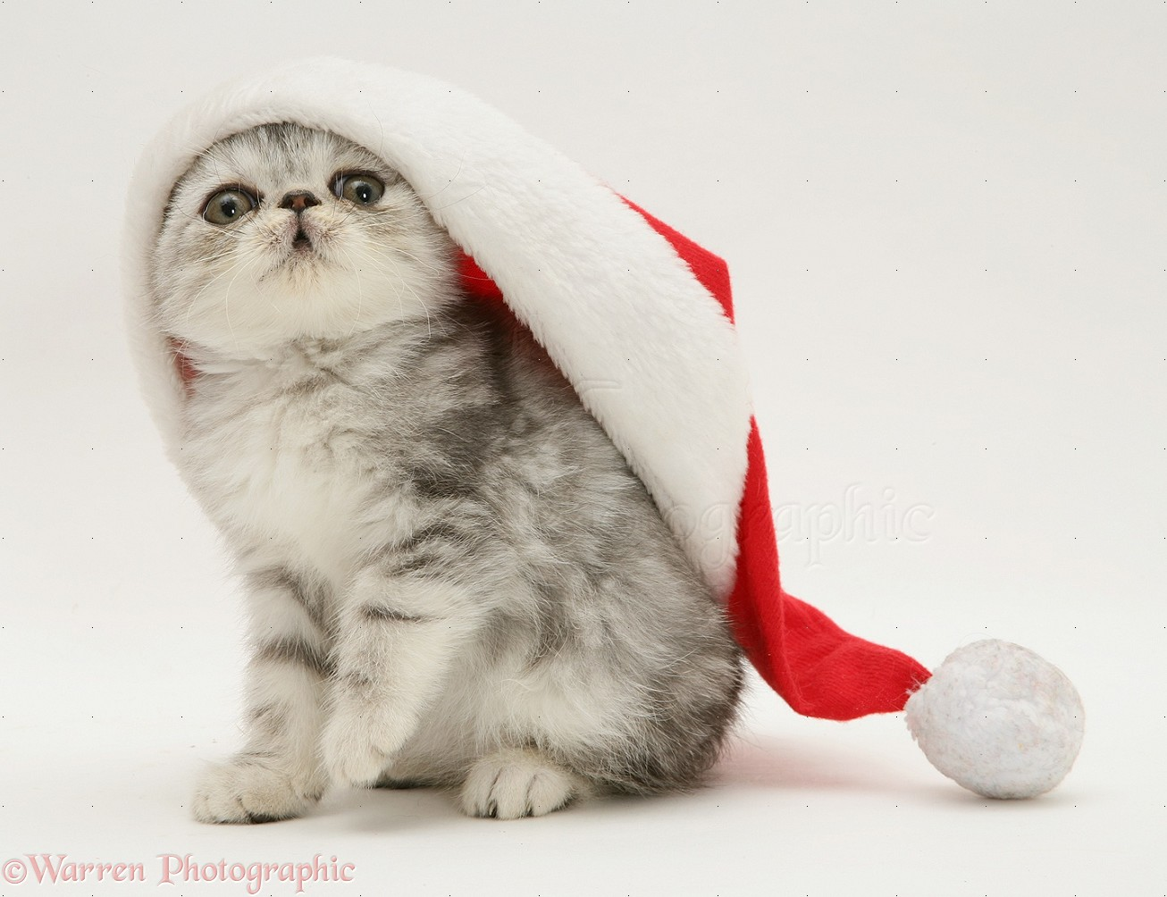 Kittens Wearing Santa Hats Kitten Wearing Santa Hat