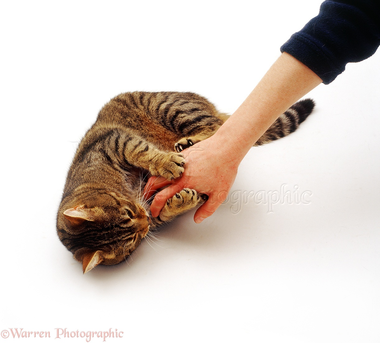Cats Scratching A Person