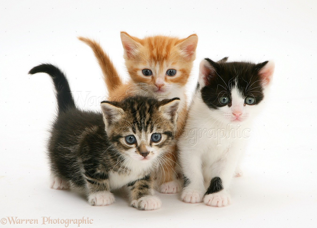 Image result for three kittens images