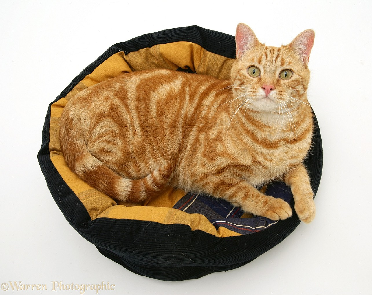 Best Heated Cat Bed Uk