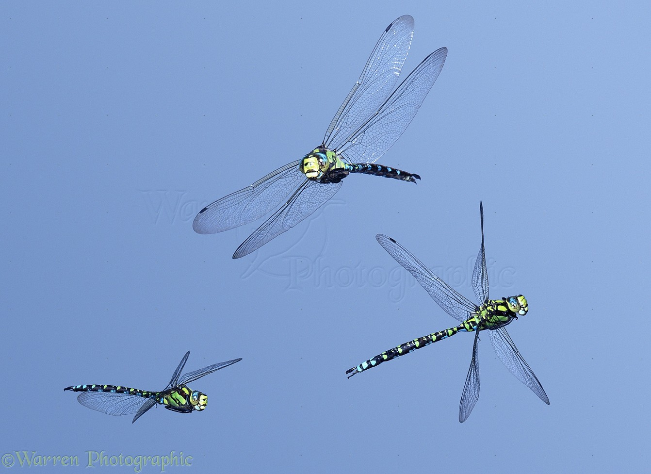 southern europe map with 13533 Southern Hawker Dragonflies In Flight on All Good Positions In Kazakhstan Are Held By Southern Clans 9919 likewise Bosnia Geographic Statistics together with Eurovelo 6 further Cruise To Risoyhamn also Biogeografia.