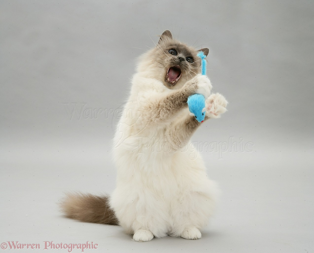 cross-sell cat and cat toys ultimate upsell shopify app