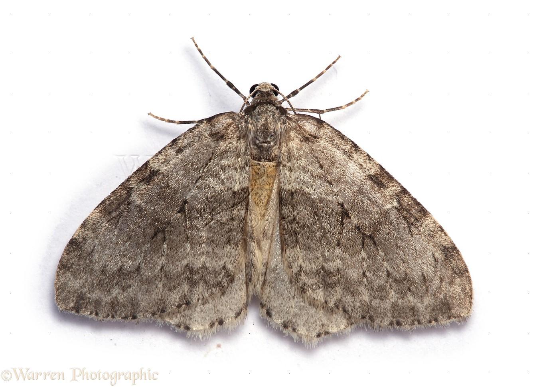 meaning of moth lightgrid lichtnetz reddeluz. Black Bedroom Furniture Sets. Home Design Ideas