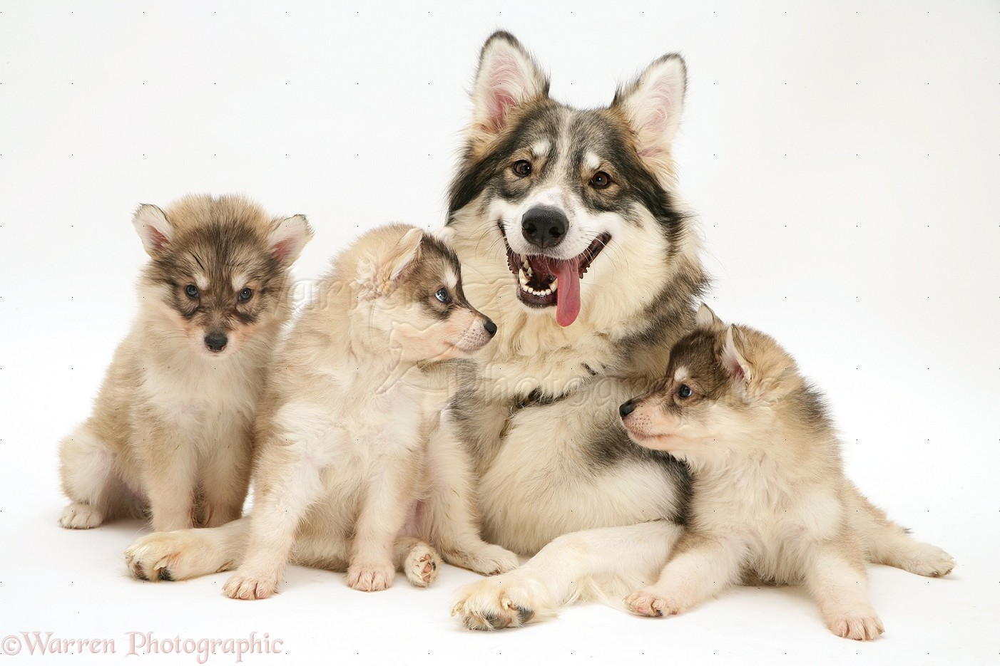 Dog And Puppies Video