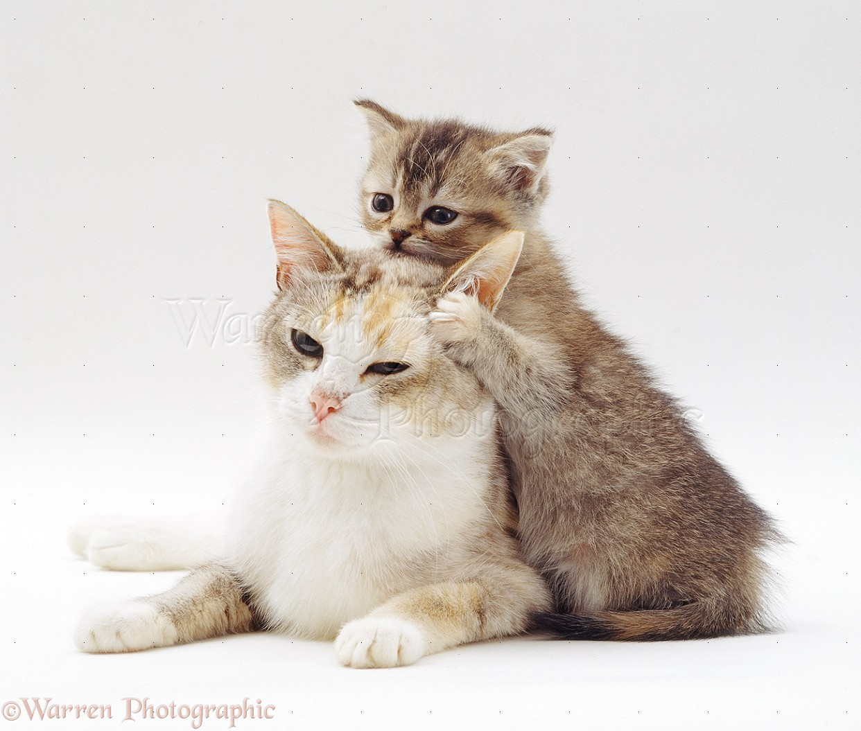 Cute cat and kitten photo WP