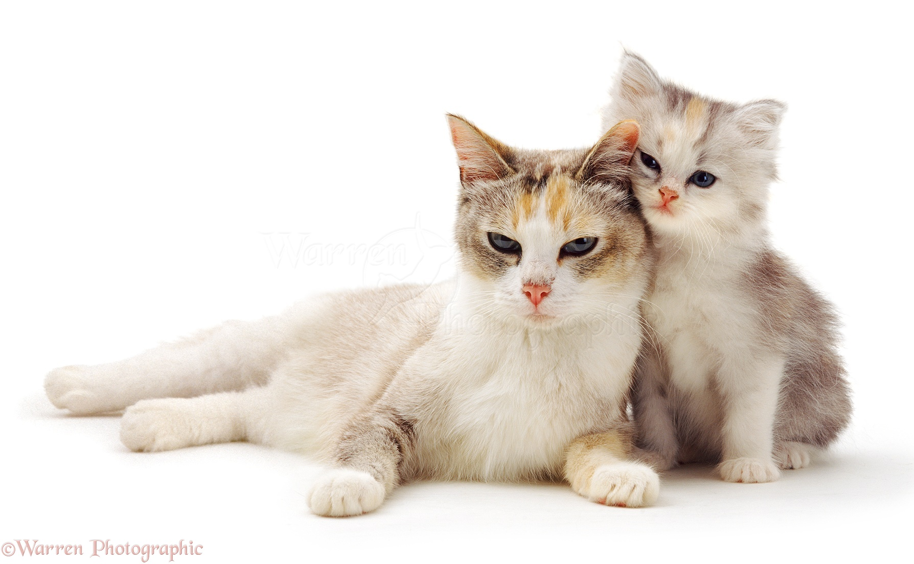 cute cat and kitten photo wp14195