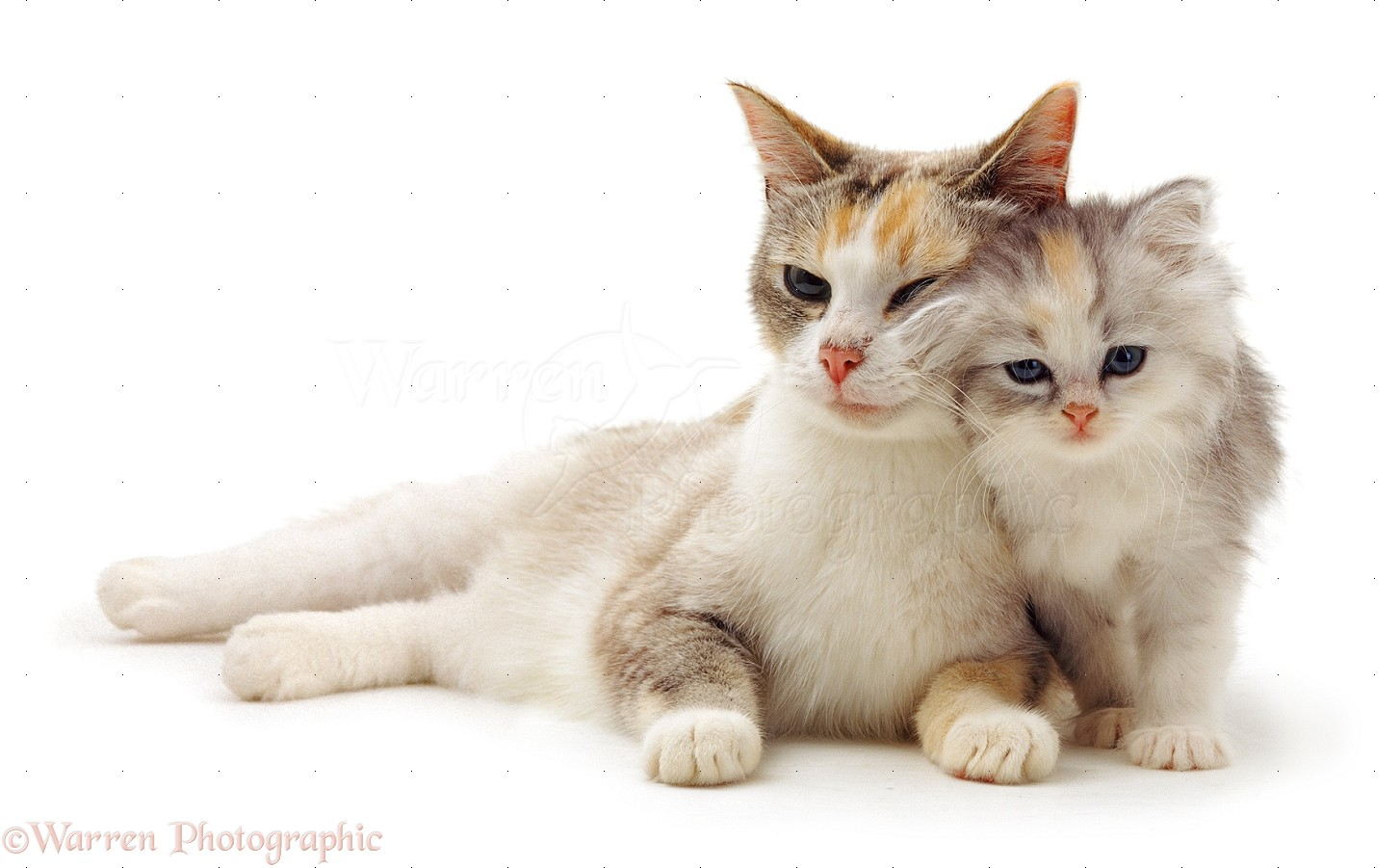 cute cat and kitten photo wp14196