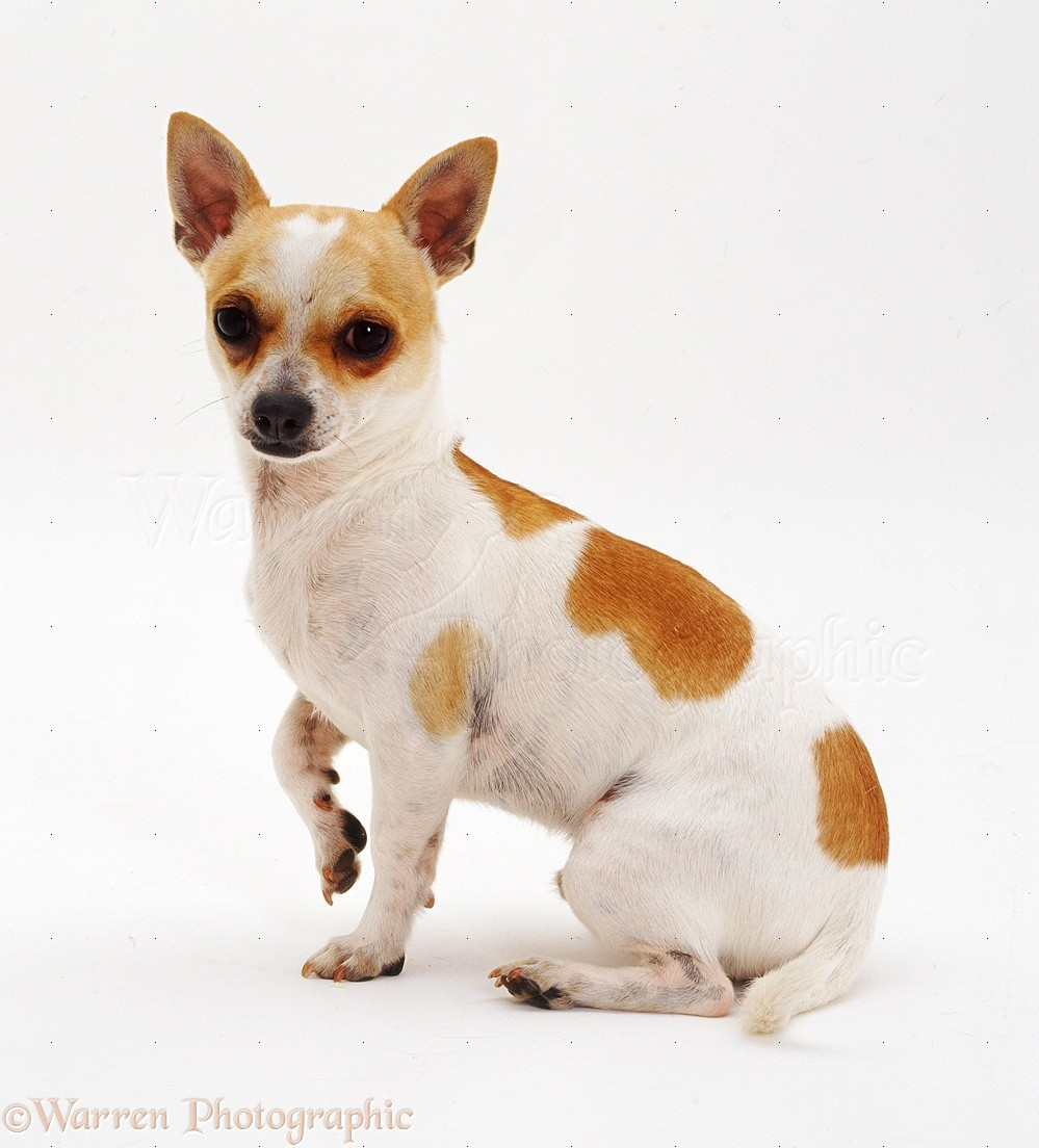 Smooth Haired Dog Breeds