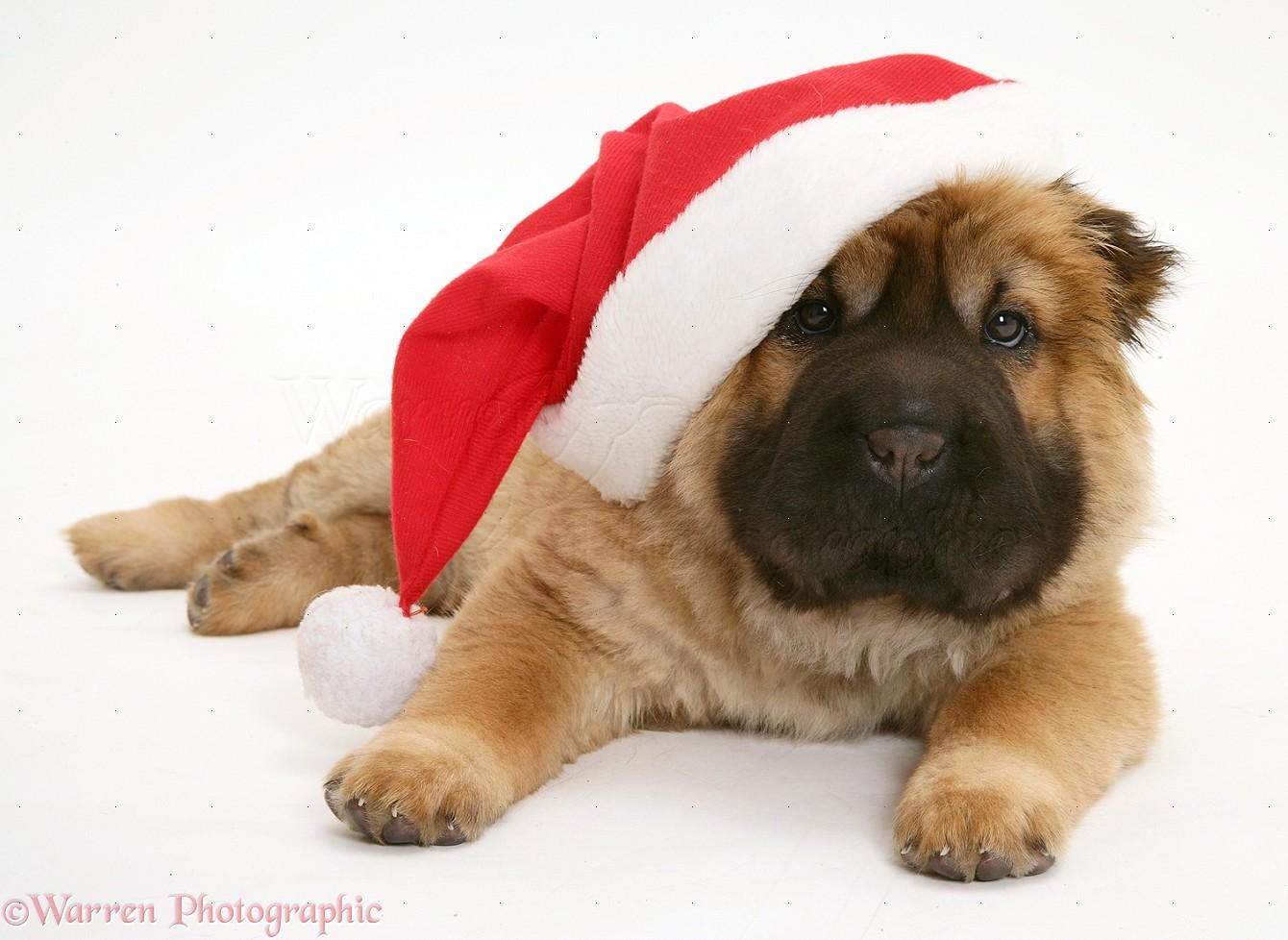 Dog Photos, Dog Pictures, Puppy Photos, Puppy