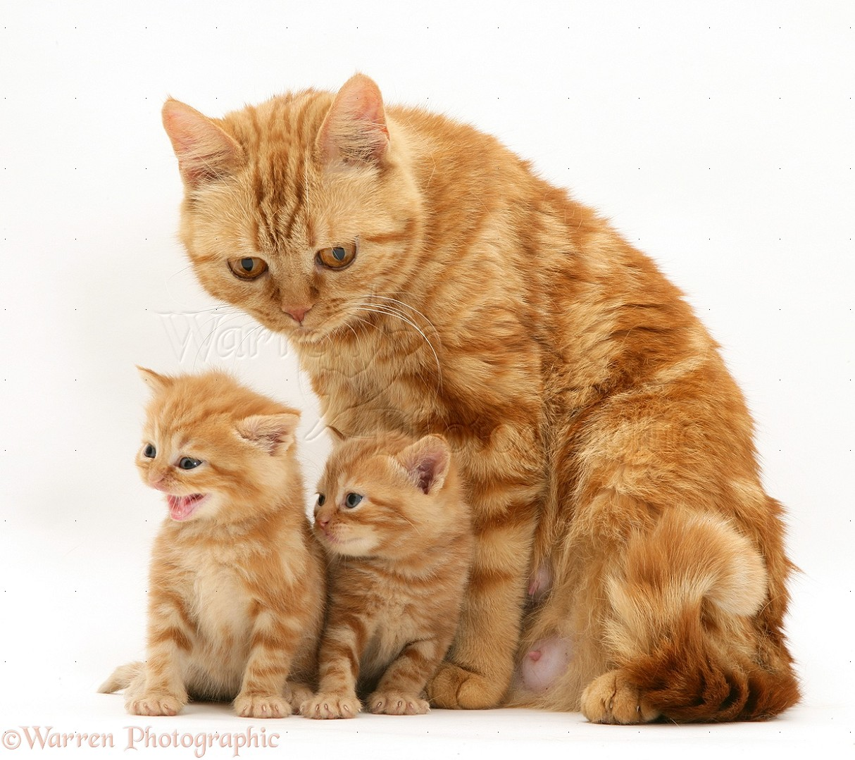 Mother Cat And Kittens Video
