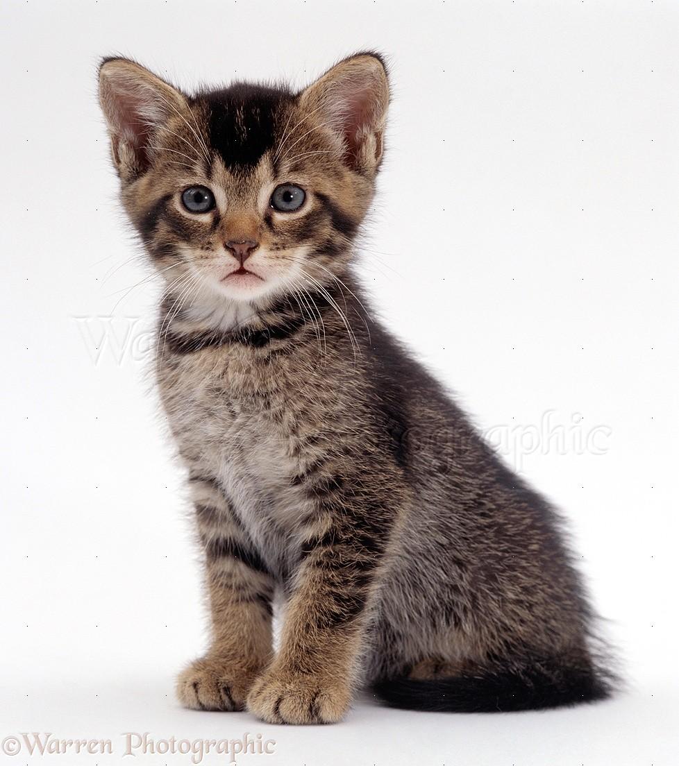 Cat Wild Cat Hybrid
