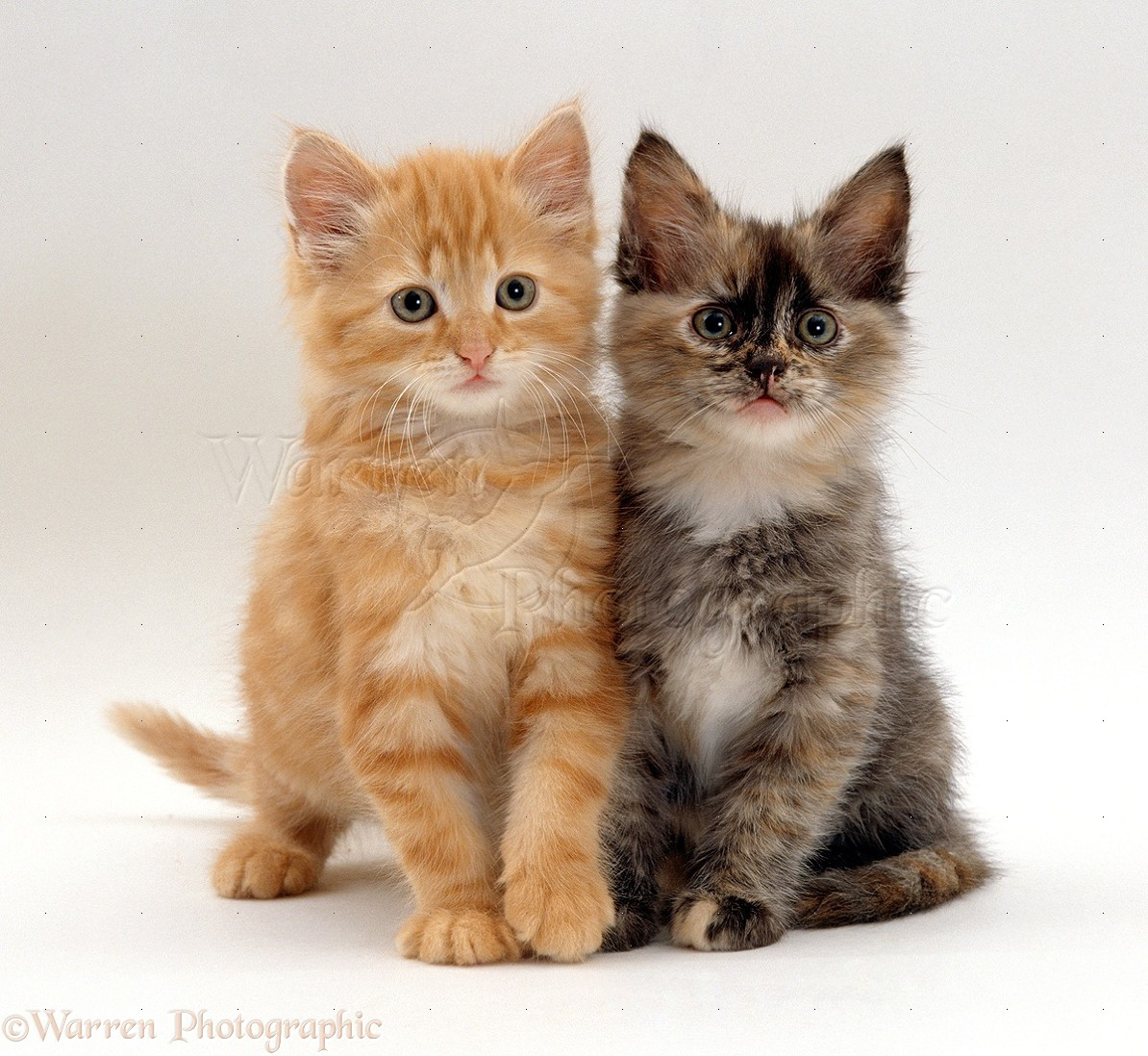 cute black and white kittens wallpaper