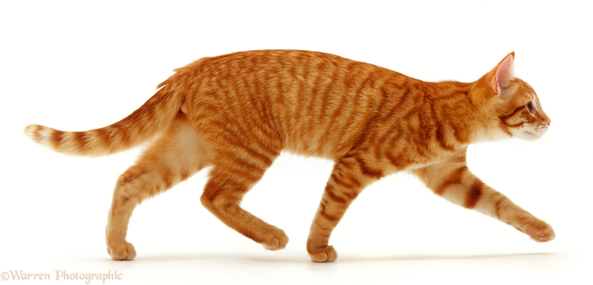 Pictures Of Cats Running