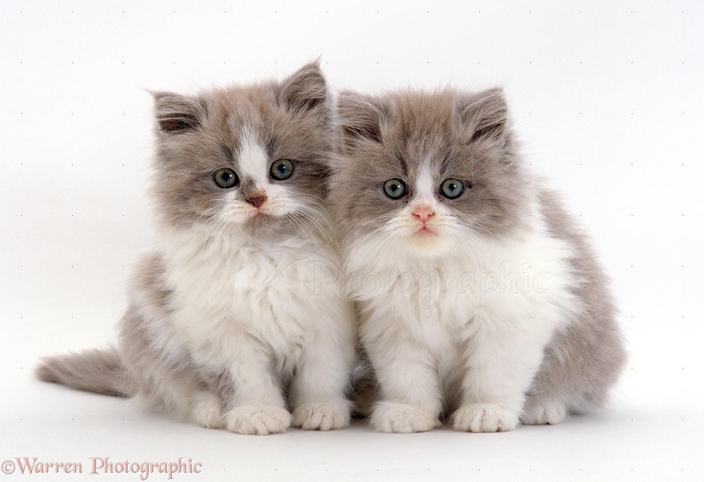 Two Persian cro...