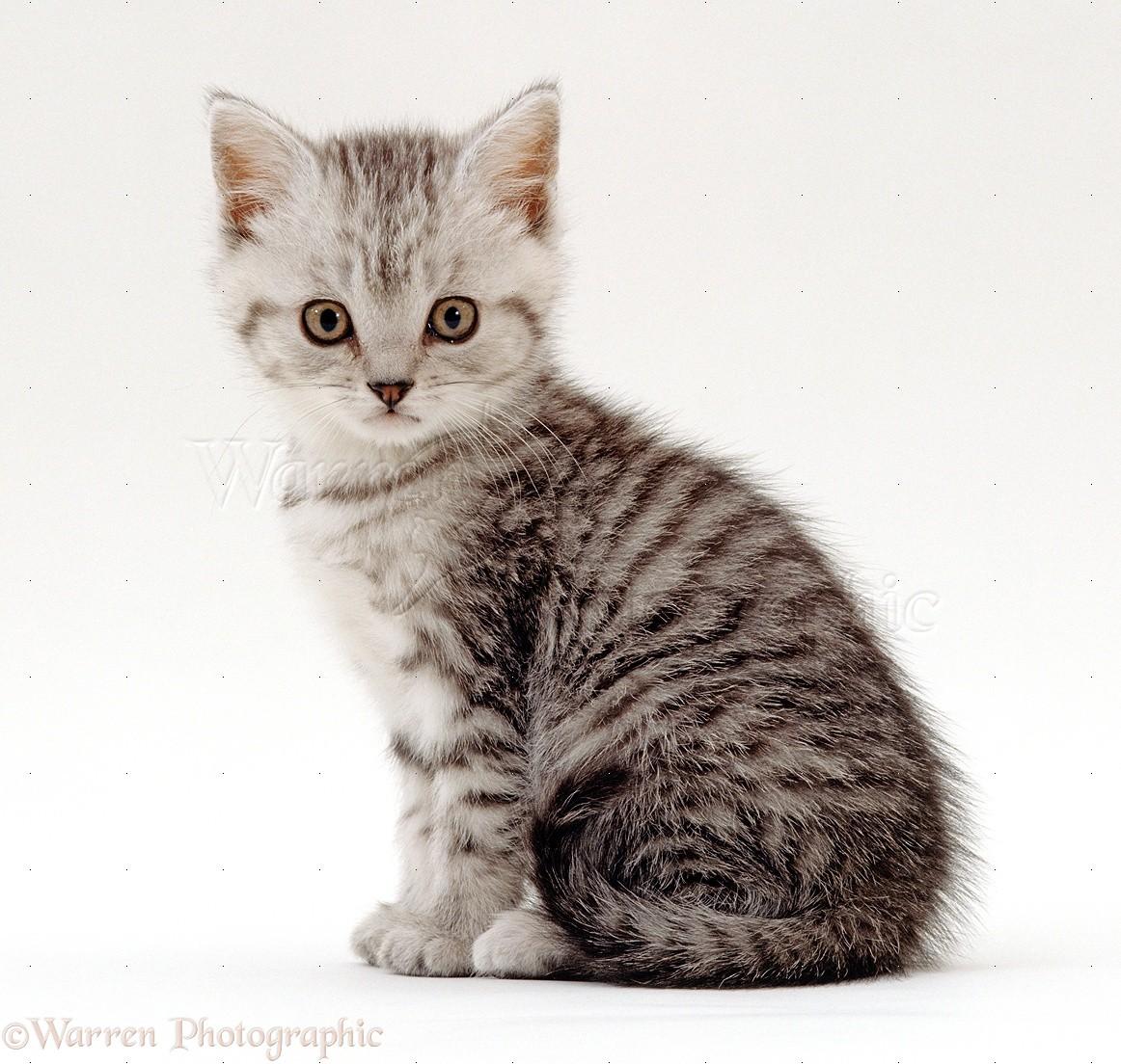 cat breed testing