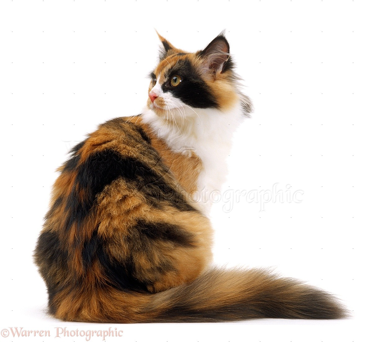 c 15 cat