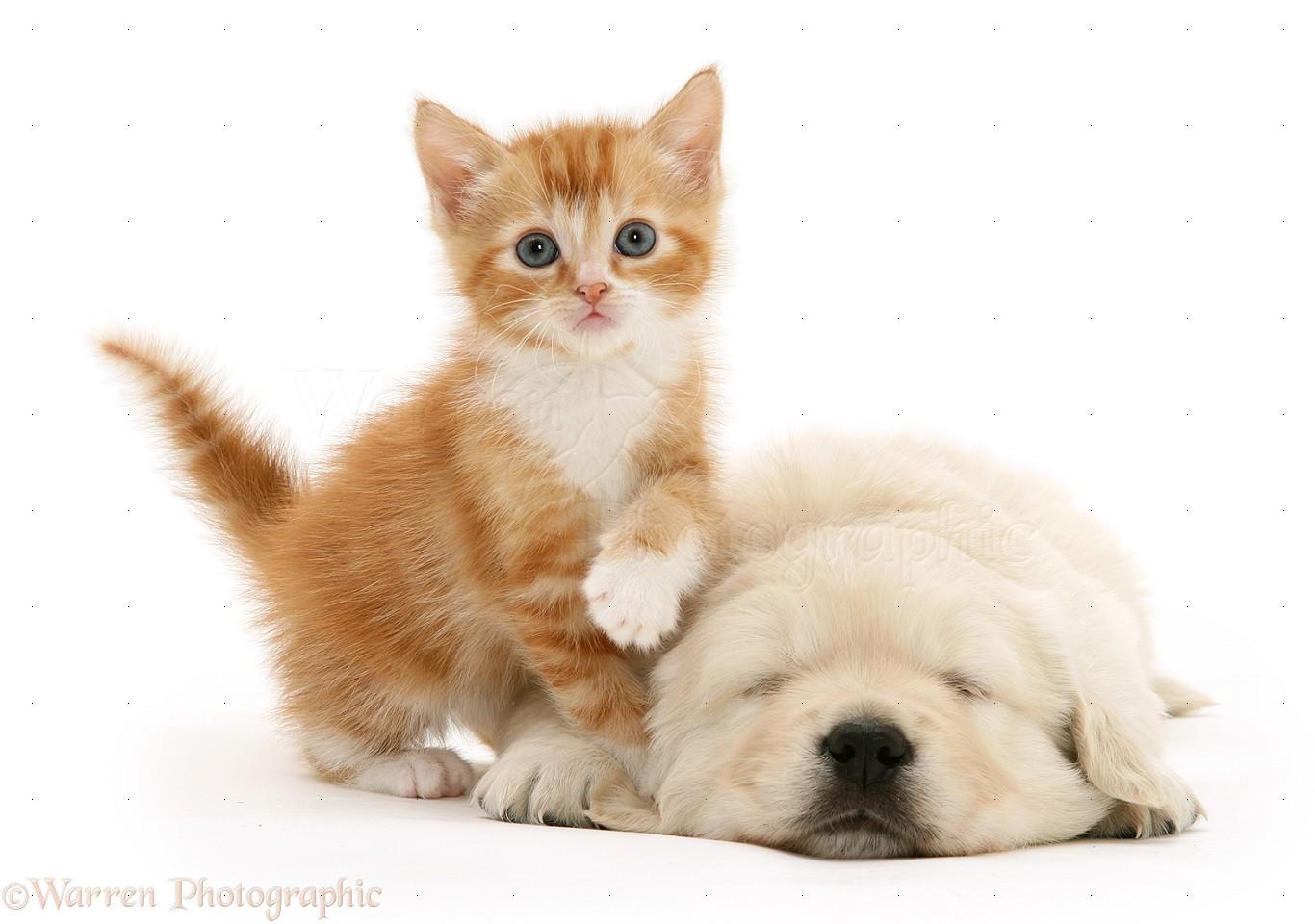 Our Litter Of Golden Retriever Pups  Week 5  Puppy In