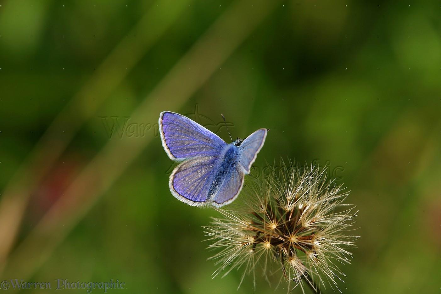 pablo flores photography Y