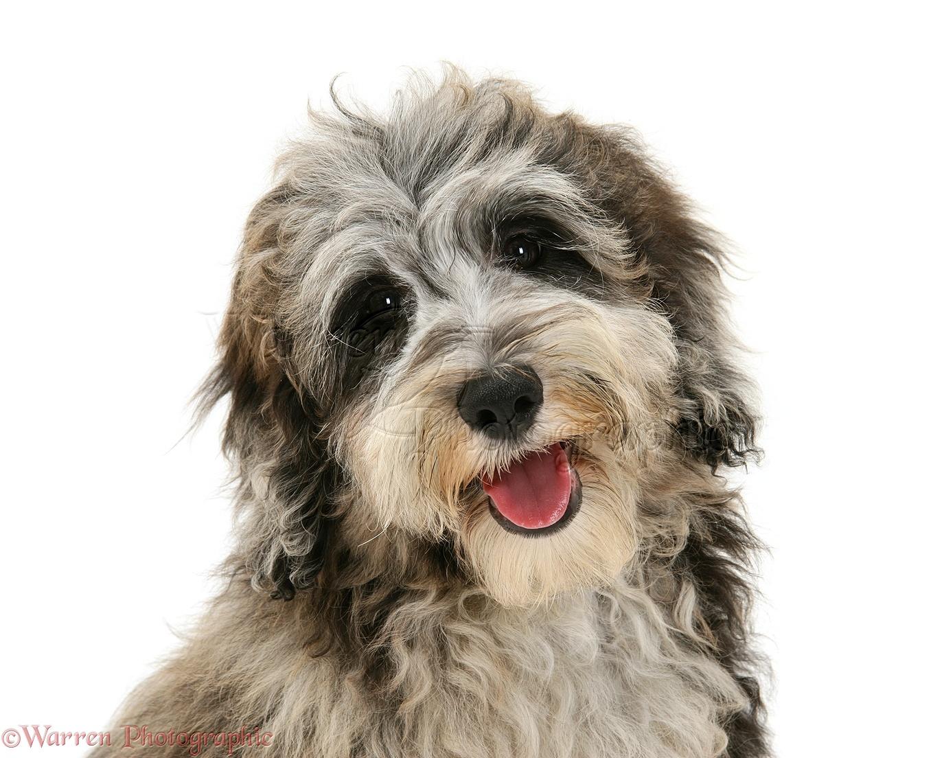 Dog Breeds Photography