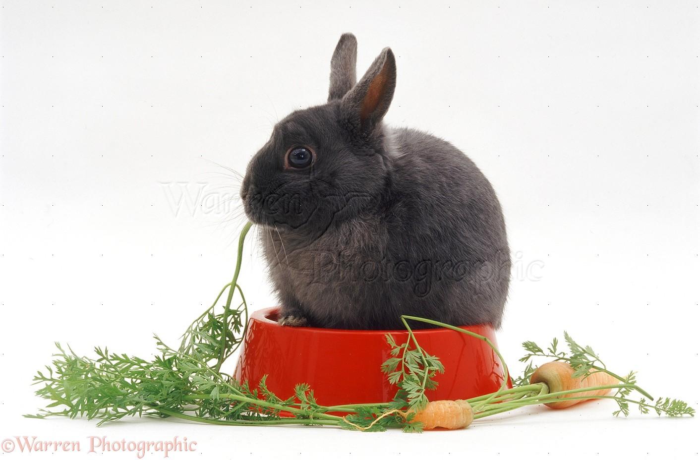 Rabbits Baseball