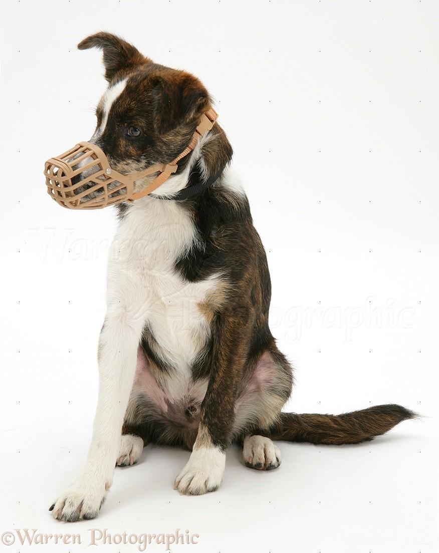 Dog Muzzle Options Uk