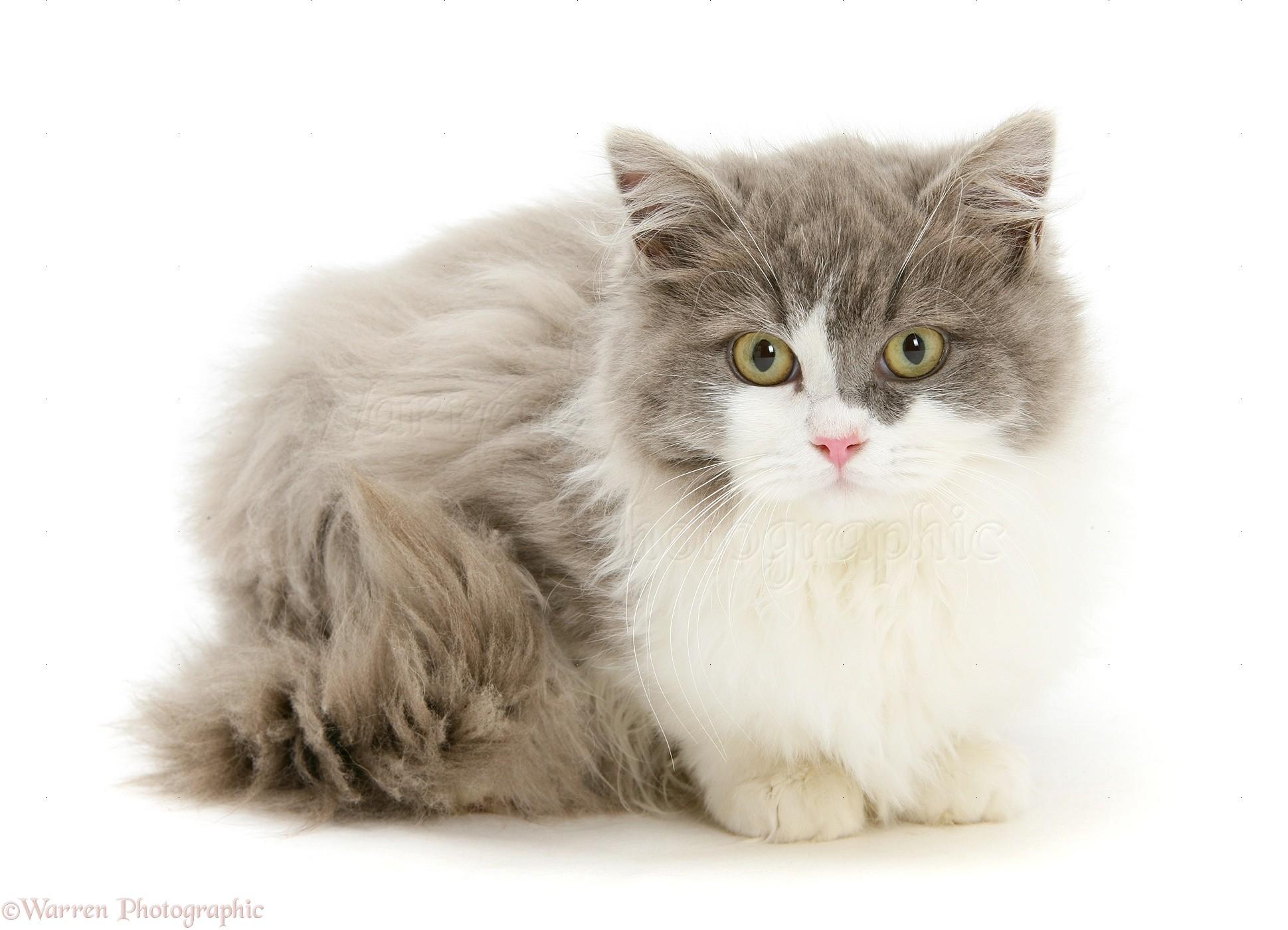 cat girl maid