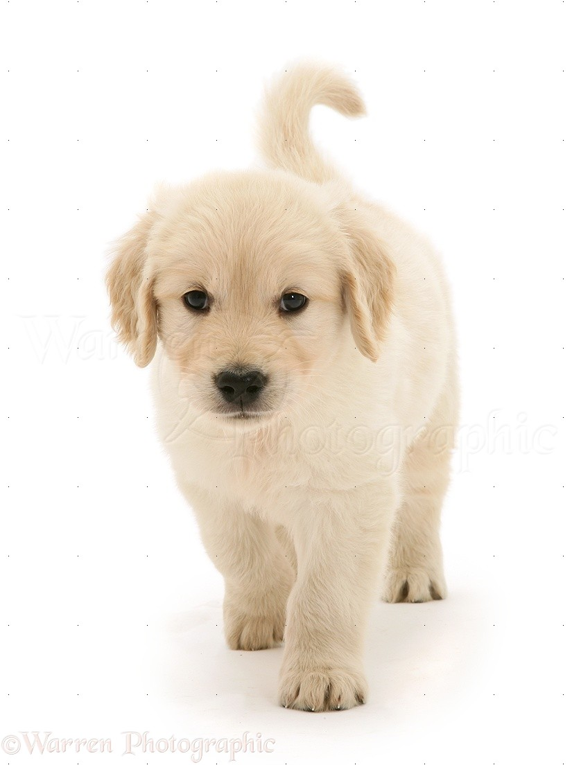 free dating site advice dog wallpaper Free dating site and matchmaking service created exclusively for pet lovers online dating for singles with a love for their pets, looking for friendship or love.