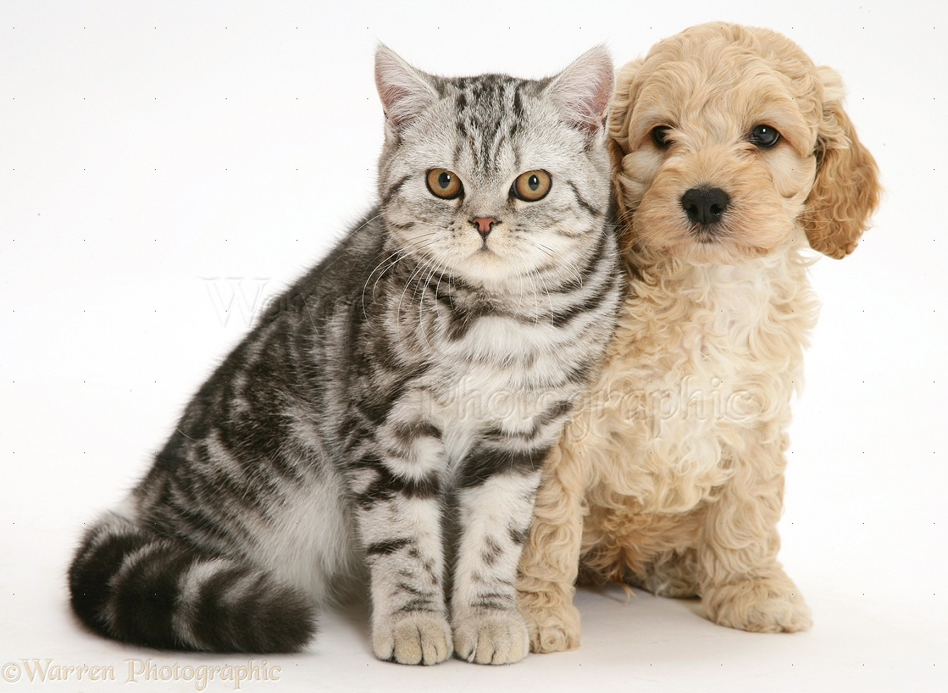 Pictures Cats And Dogs Together