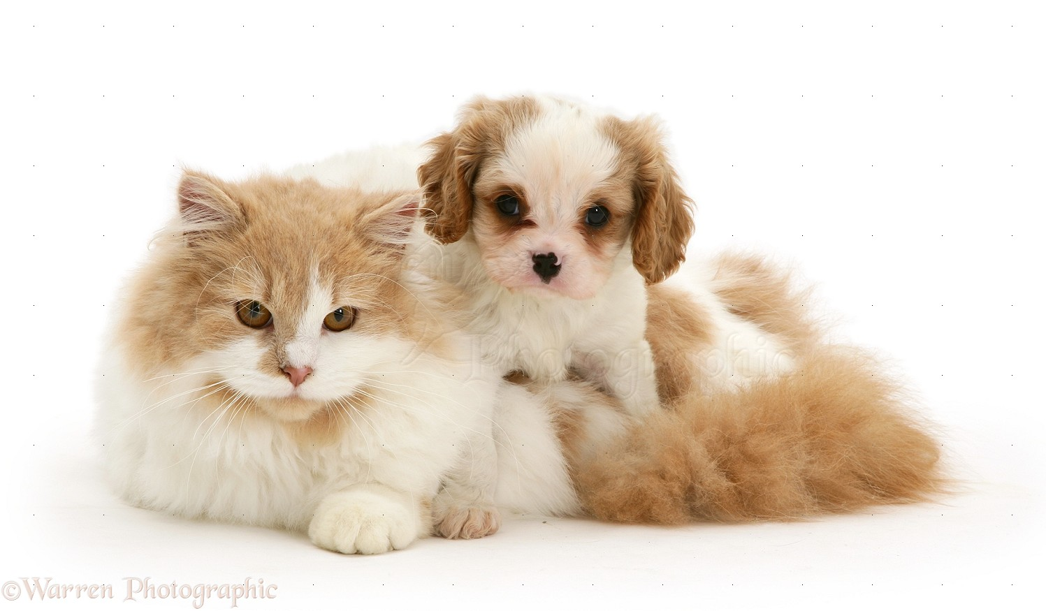 Cat Dog Together Cute Kittens And Puppies | 2017 - 2018 Best Cars ...