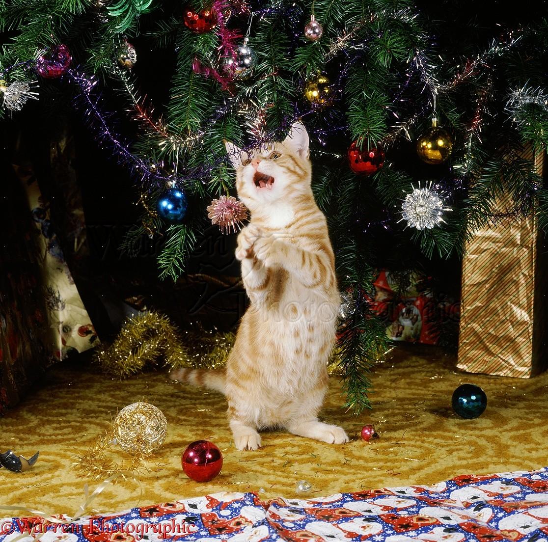 Cat Christmas Ornaments Uk