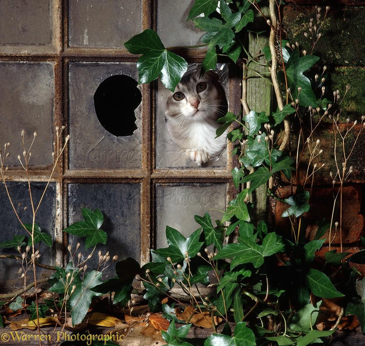 Cat in broken window photo WP18157