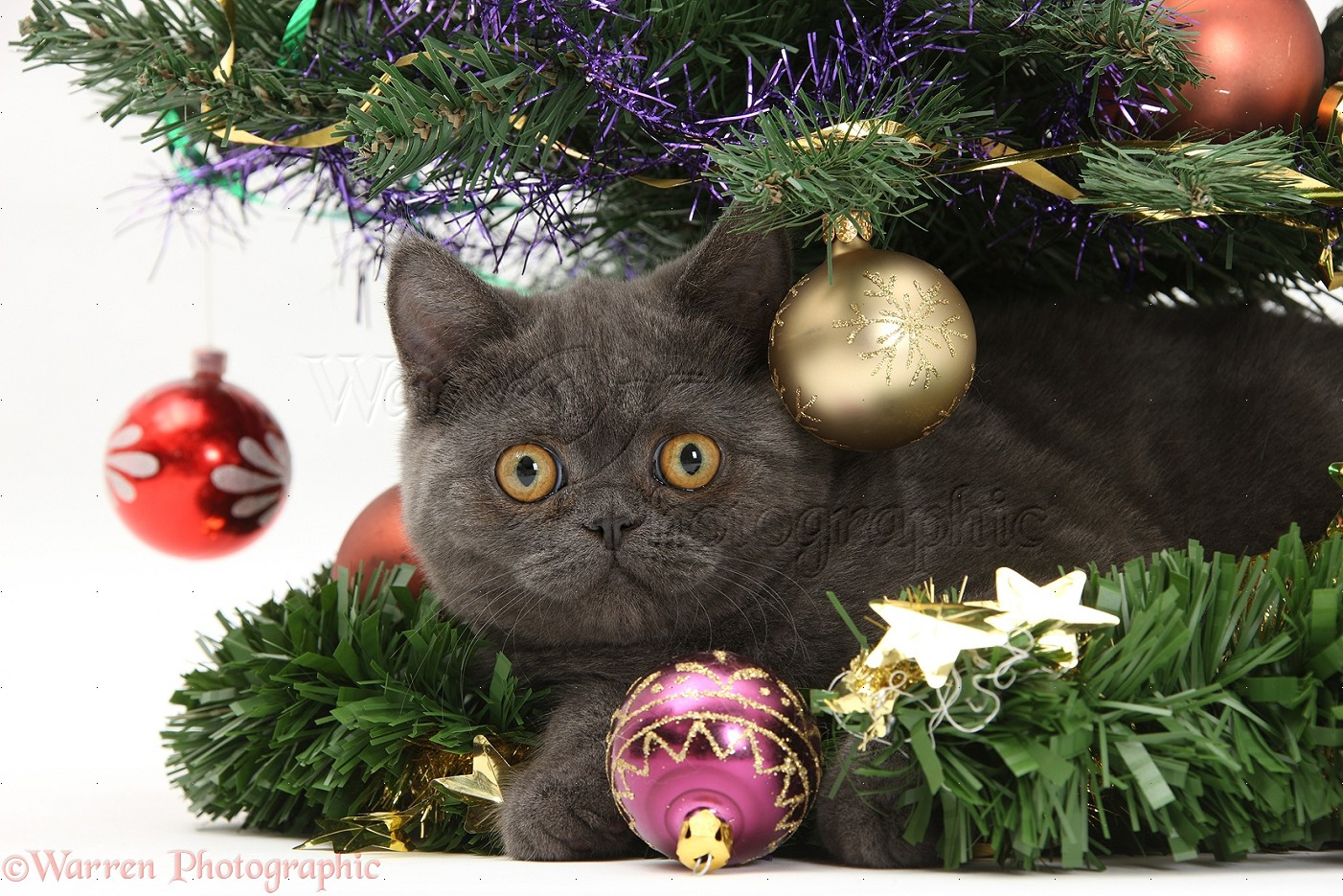 Grey Christmas Tree Grey Kitten Under A Christmas Tree Photo Wp18223