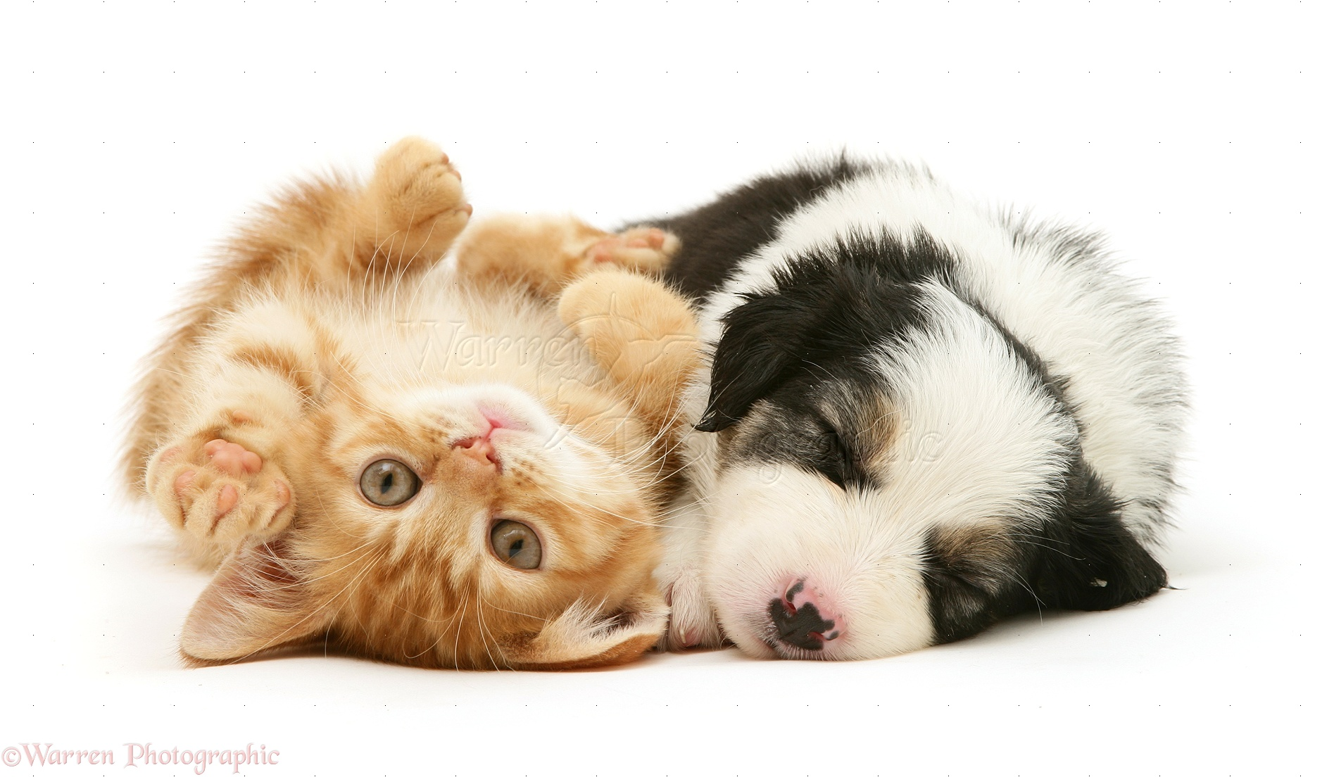 puppies-and-kittens-kissing