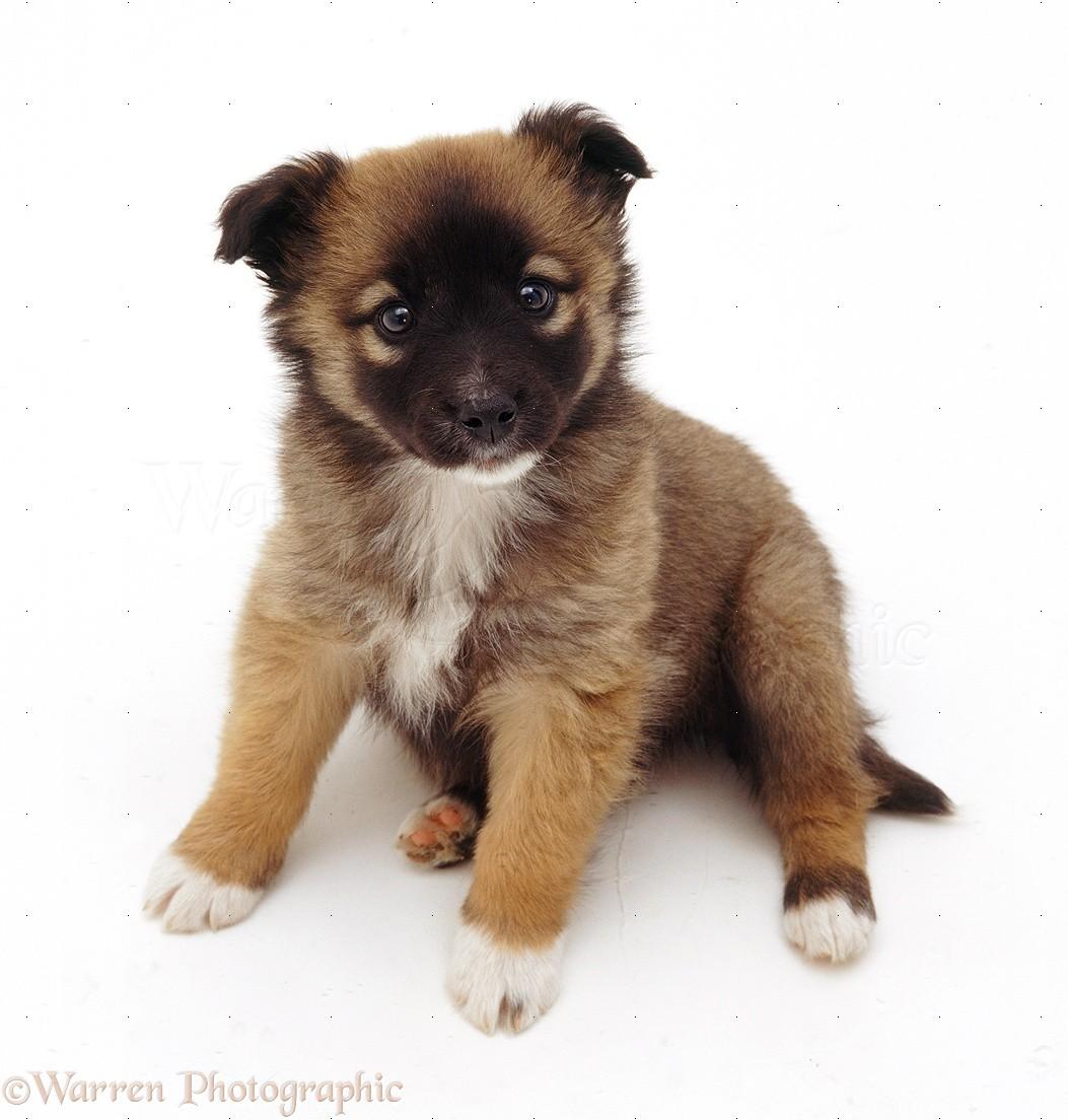 Dog: Cute mongrel pup, looking up photo WP18681 Дворняжка Щенок